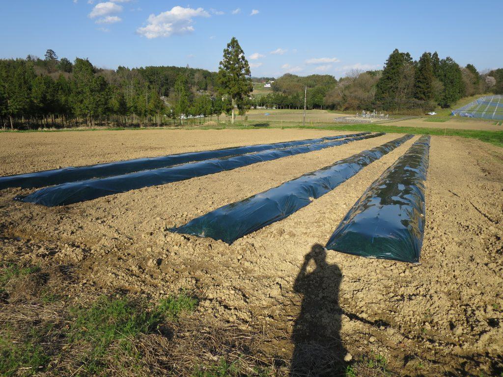 太陽熱養生処理-晴
