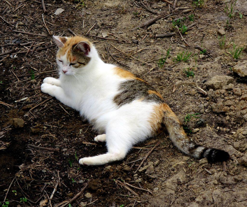 ハウス猫-曇のち晴