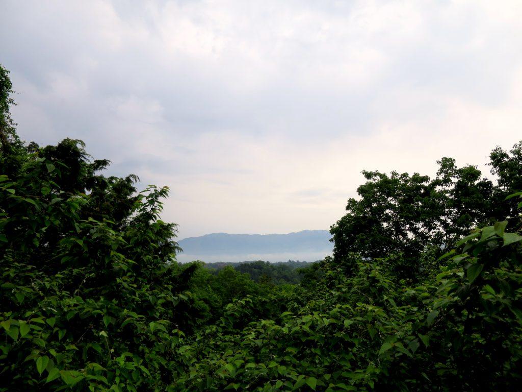 朝、畑から遠くをみると雲海が!-晴