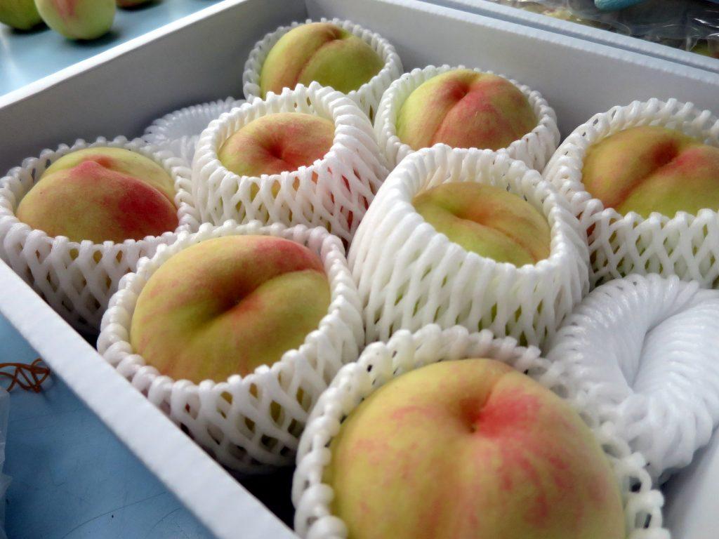 桃の直売-曇