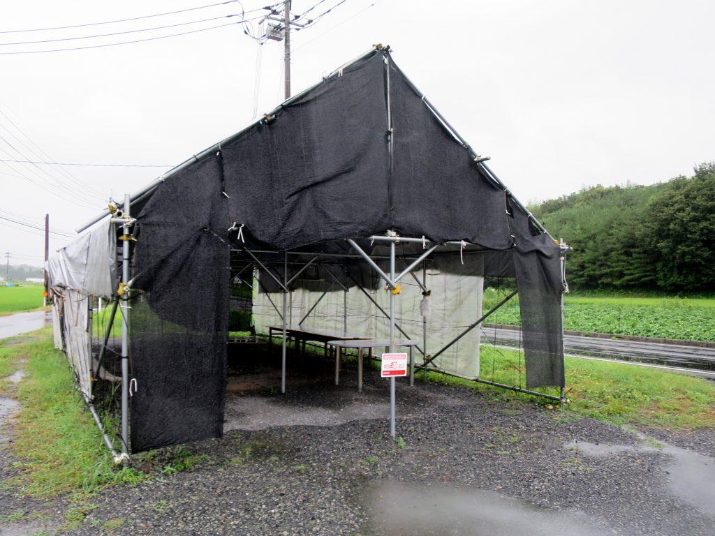 台風5号接近中-雨