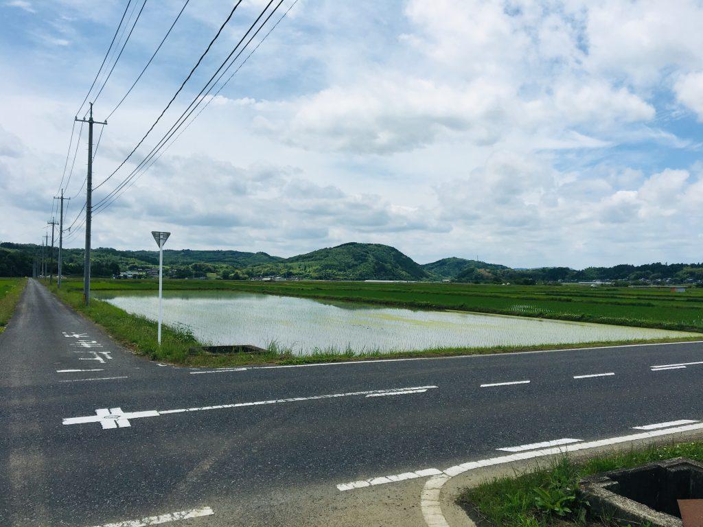 草刈りday-曇