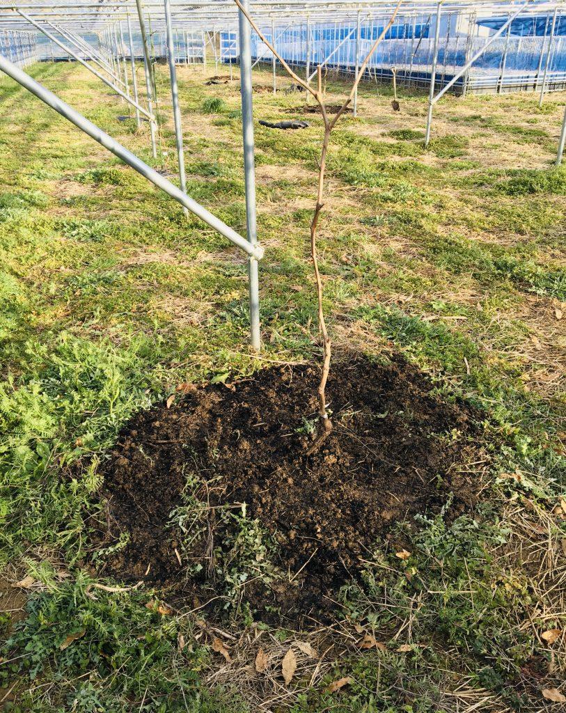 苗木の植付-雨のち晴